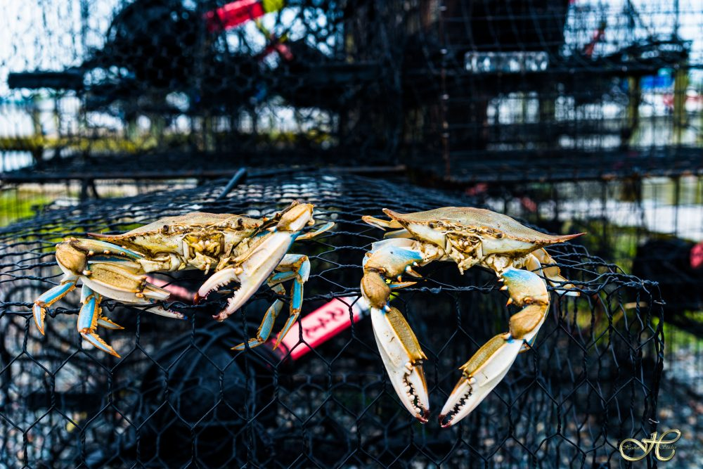Crab Pots/Crabs